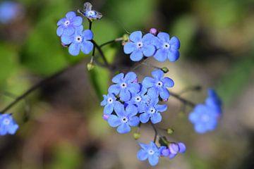 Blume von sara flikweert