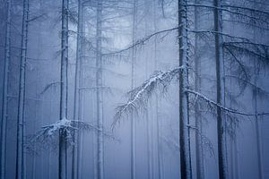 Winterwonderland van Andrew George