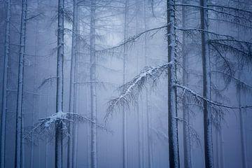 Winter-Wunderland von Andrew George