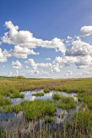 Texel duinlandschap / Texel dune landscape