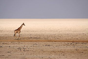 Giraffe van Henk Langerak