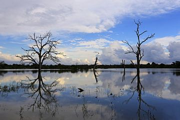 dode bomen in een meer  van Antwan Janssen