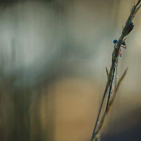 blauwe juffer van Ria Bloemendaal
