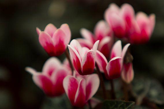 Bloemen van Richard Lentjes