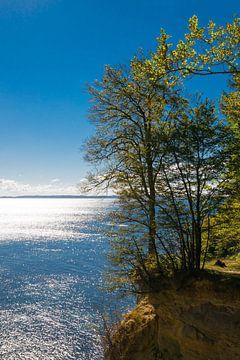 Rügen - Herfst aan de steile kust in Jasmund Nationaal Park van Reiner Würz / RWFotoArt