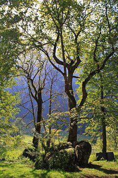Bäume von Bas Rutgers