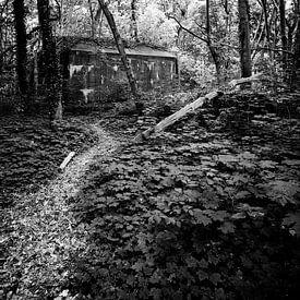 Pad door het bos sur Erwin Zeemering