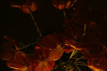 Nacht-Tulpen von Jessica van den Heuvel