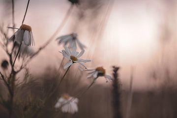 Blumen Teil 20 von Tania Perneel