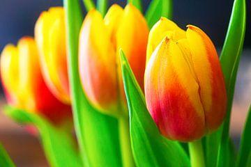 Tulpen van Karel Warburg