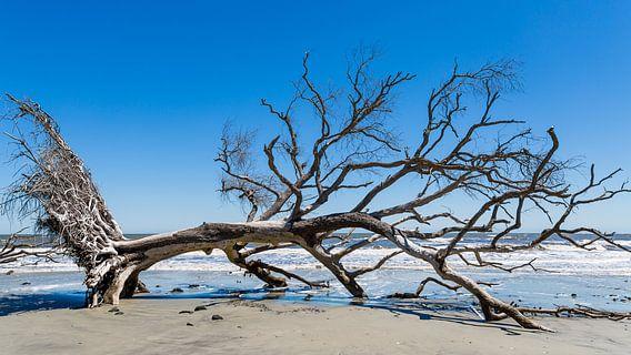 Dode boom op het strand