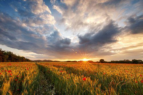 Mohnfeld bei Sonnenuntergang van Oliver Henze