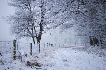 Forststraße im Winter von Karijn | Fine art Natuur en Reis Fotografie