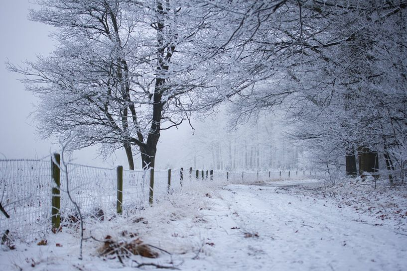 bosweg in de winter van Karijn | Fine art Natuur en Reis Fotografie