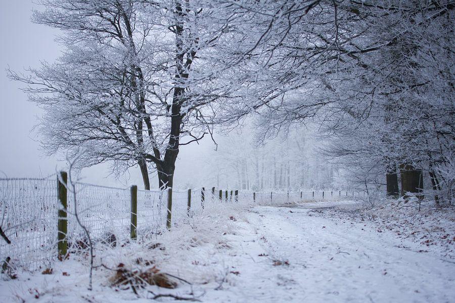 bosweg in de winter