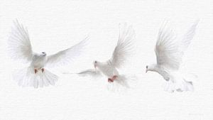 FriedensTauben,  Doves von Gabriella David