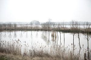 Landschap in de Biesbosch van
