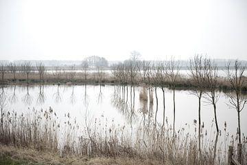 Landschap in de Biesbosch von Irene Kuizenga