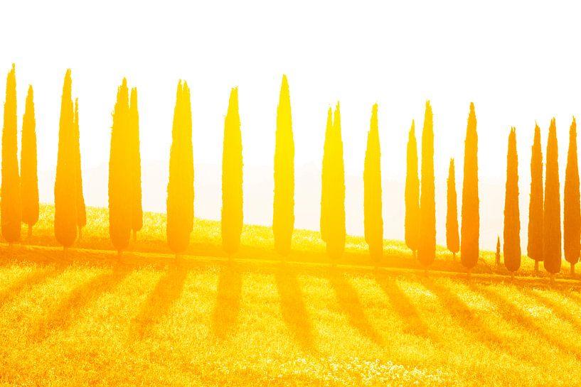 Cypressen laan bij zonsondergang van Rens Kromhout