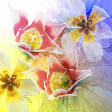 Der Frühling erwacht von Thea Walstra