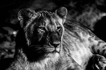 Relaxende leeuwin von Marit van de Klok