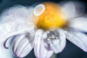 Waterdruppel op een bloem