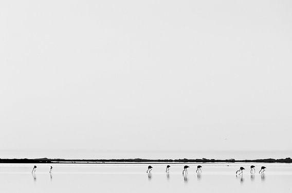 Flamingo's inde Camargue te Frankrijk van Tom Elst