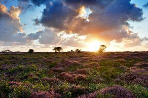 Heide op Texel