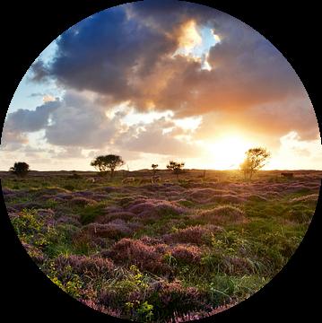 Heide op Texel van Ronald Timmer