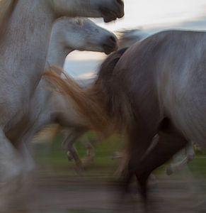 De dynamiek van een kudde paarden in galop van