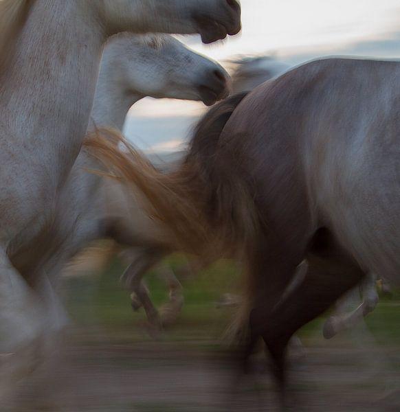 De dynamiek van een kudde paarden in galop von Suzan Baars