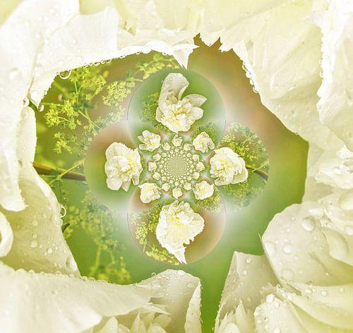 Artistieke witte roos
