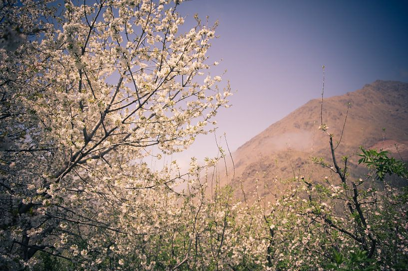 Bloesem in de bergen van Sander van Leeuwen