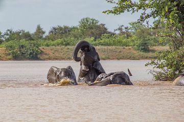 Elefanten schwimmen im Sable-Damm, Krugerpark, Südafrika von Marijke Arends-Meiring