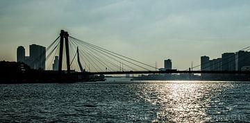 Rotterdam  bruggen van Westland Op Wielen