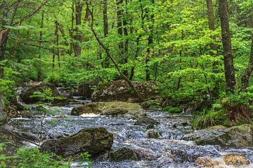 Riviertje in het bos van Mario Brussé
