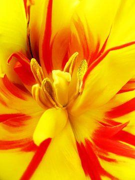 Happy colours van Anneke Verweij