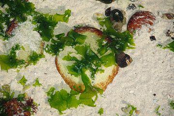Natures Art Sea Pizza