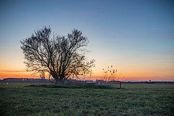 Baum in der Dämmerung von Johan Mooibroek