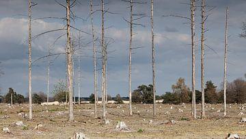 Kale boomstammen op het Aekingerzand van Dick Doorduin