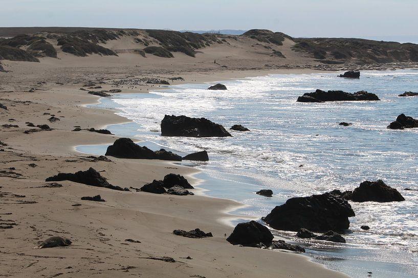 De eenzame zeeolifant - Highway 1 Verenigde Staten van Martin van den Berg Mandy Steehouwer