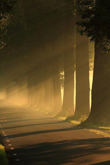 Zonlicht door de bomen op een weg. Zen, rust