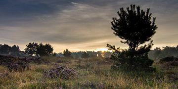 Het Mysterieuze  Deelerwoud ... van Hans Brinkel