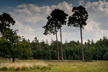 three trees together create a rural image with a beautiful cloudy sky during a walk in autumn van Lieke van Grinsven van Aarle