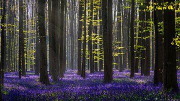 Dreaming of Spring von wim denijs
