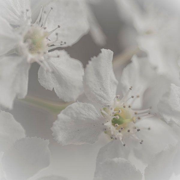 Dromerige witte bloesem