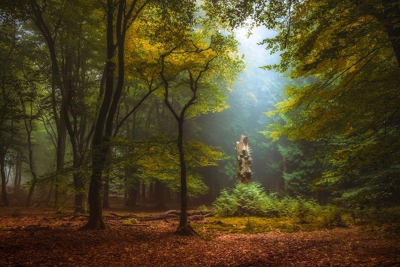 Spotlight van Niels Barto