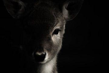 portretfoto hert / deer van Blanchette van Hooren