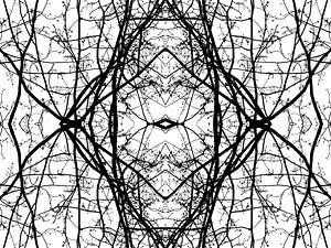 Takken patroon in zwart wit