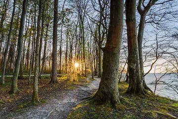 Frühlingsanfang  im Küstenwald von Ursula Reins